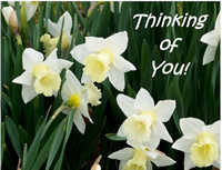 Thinking of you daffodils card